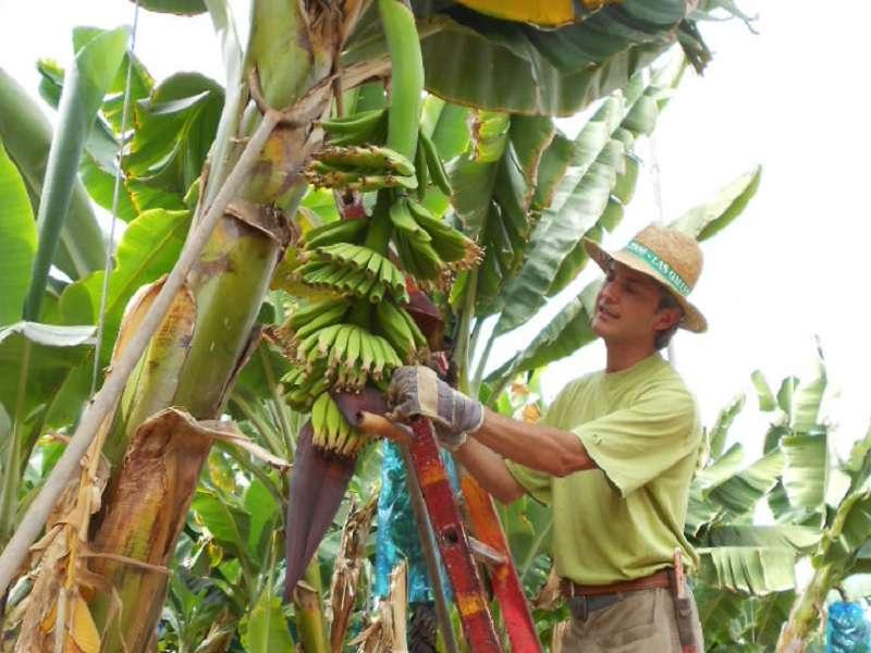 Finca Las Margaritas - Banana Experience