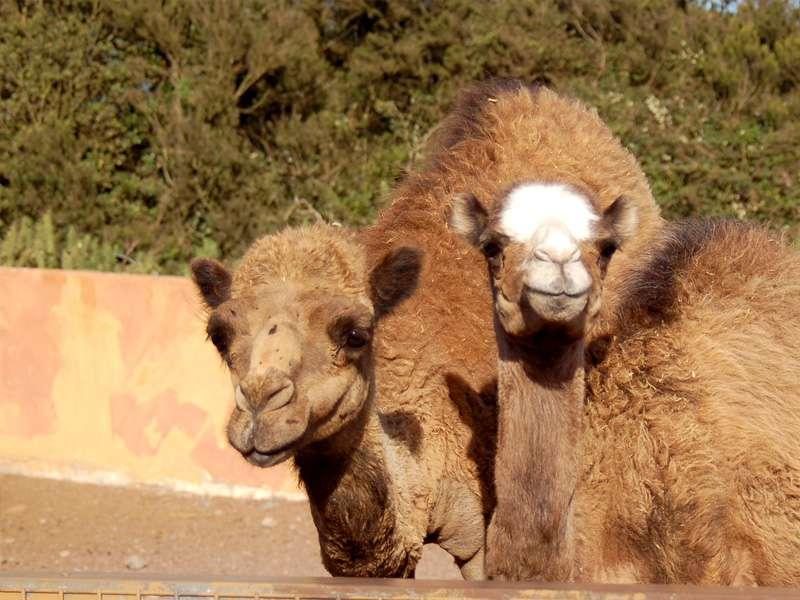 Camello Center