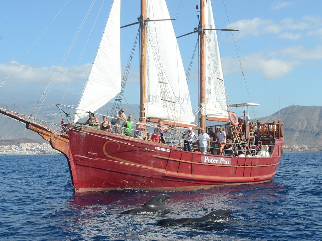 Peter Pan Tenerife