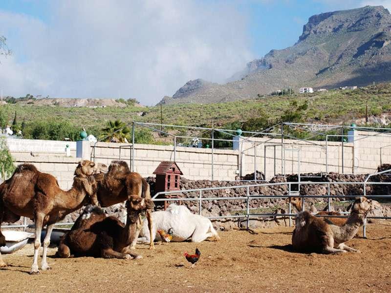 Camel Park