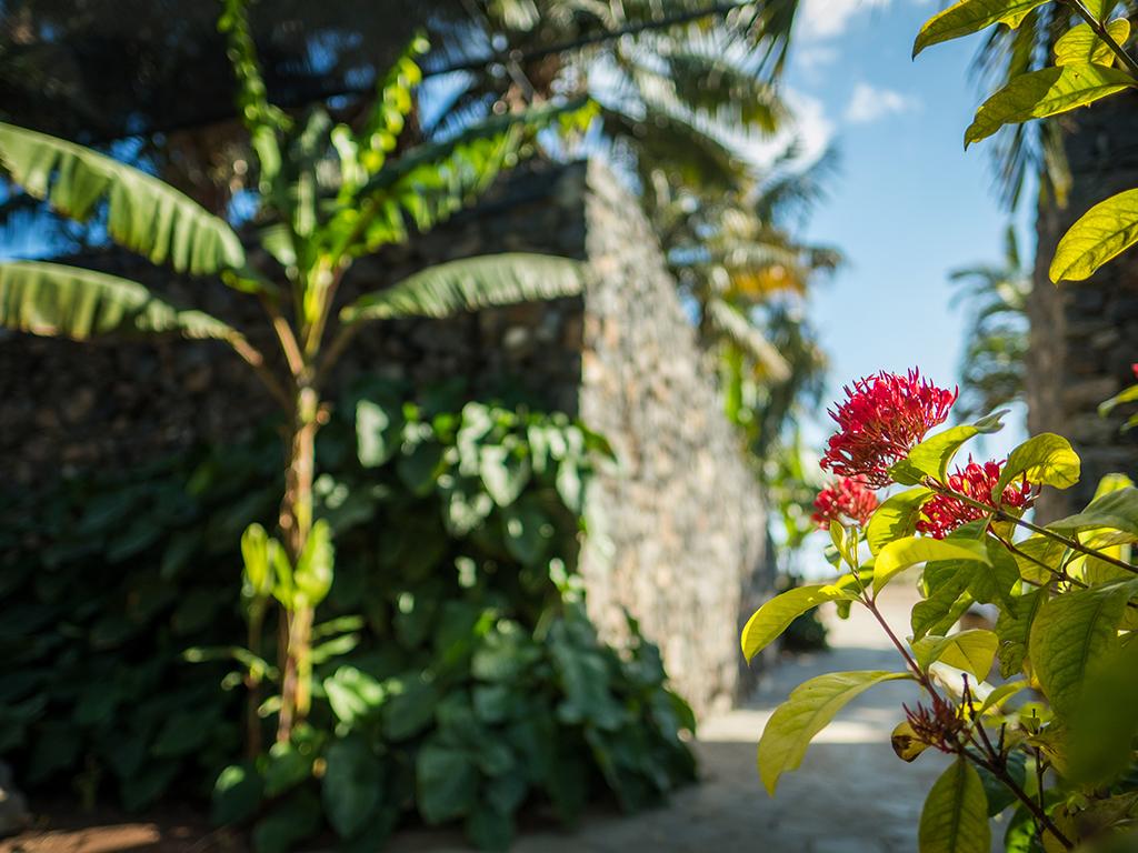 Palmetum Santa Cruz